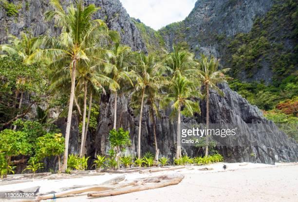 tropical beach with coconut palm trees - paisajes de filipinas fotografías e imágenes de stock