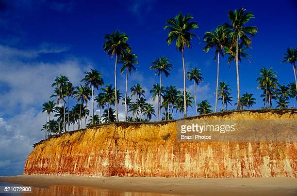 Tropical beach with coconut palmtrees on colorful cliff at Barra do Cahy beach where the Brazilian indians and Portuguese colonizers first met in the...