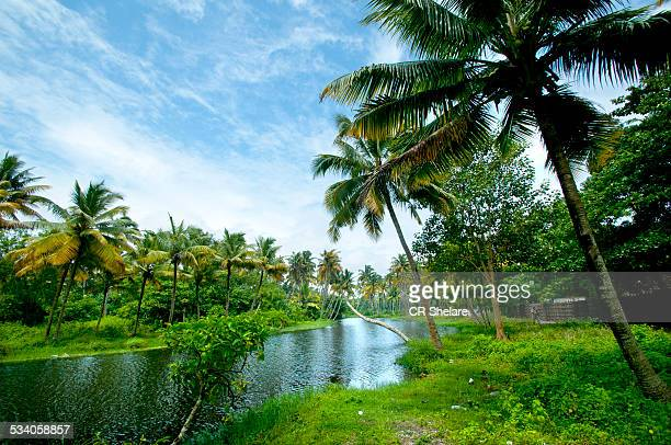 tropical beach with coconut trees - kerala stock pictures, royalty-free photos & images