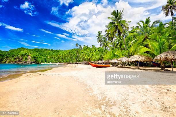 トロピカルなビーチ、ココナッツの木々、ハッツ、深いブルースカイ - バハマ ストックフォトと画像