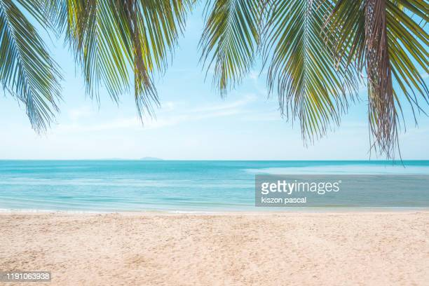 tropical beach with palm trees during a sunny day . - strand stockfoto's en -beelden