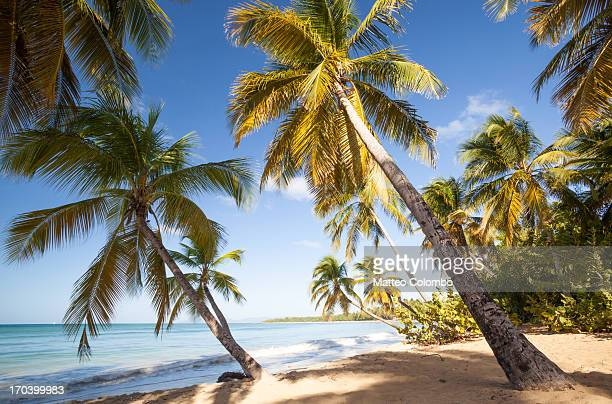 Tropical beach with palm trees in the Caribbean
