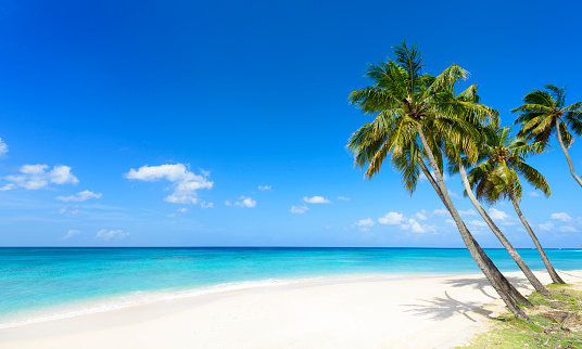 Tropical Beach With White Sand & Palm Trees 635787256