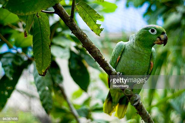 A tropical bird sits on a branch in Yasuni National Park in Orellana Province Ecuador on Wednesday Oct 14 2009 Ecuador is seeking about $3 billion in...