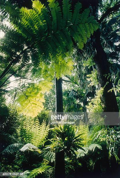 tropical botanic garden plants - botanischer garten stock-fotos und bilder