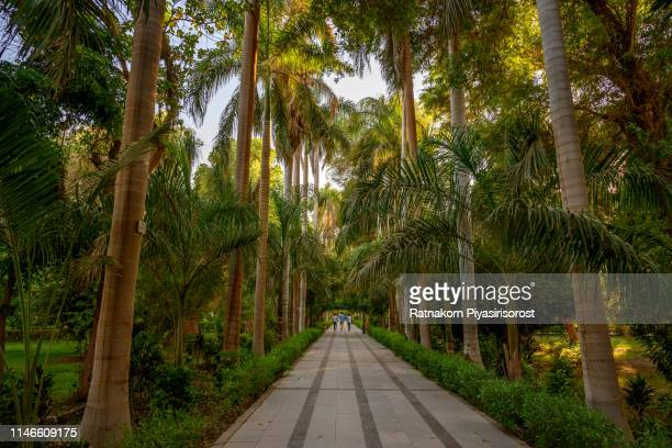 tropical botanical gardens at aswan in egyp - botanical garden stock pictures, royalty-free photos & images