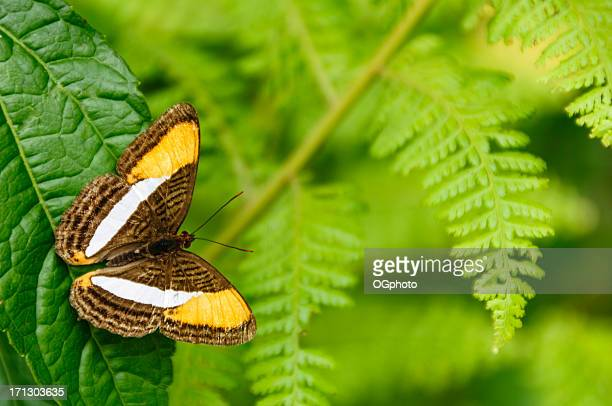 tropical butterfly in a rainforest - ogphoto stock pictures, royalty-free photos & images