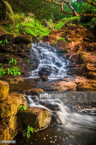 tropical cascade waterfall, hawaii - water fall hawaii stock pictures, royalty-free photos & images