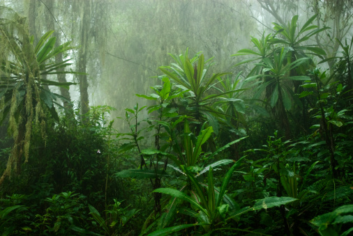 Tropical cloud forest in Central Africa 157478776
