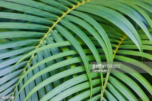 tropical coconut palm - coconut palm tree stock pictures, royalty-free photos & images