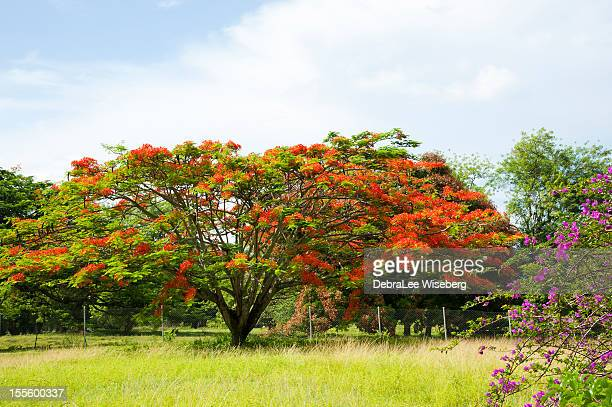 tropical colour - trinidad and tobago stock pictures, royalty-free photos & images