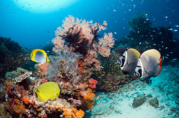 Tropical coral reef fish