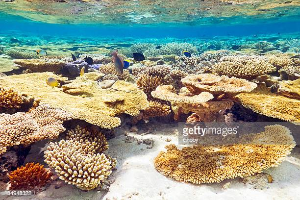Barriera corallina tropicale