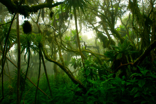 tropical dense cloud forest coverd in fog, Central Africa 184272941