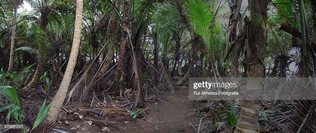 Tropical equator woods : Stock Photo
