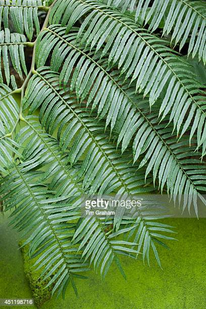Tropical fern above algae covered pond