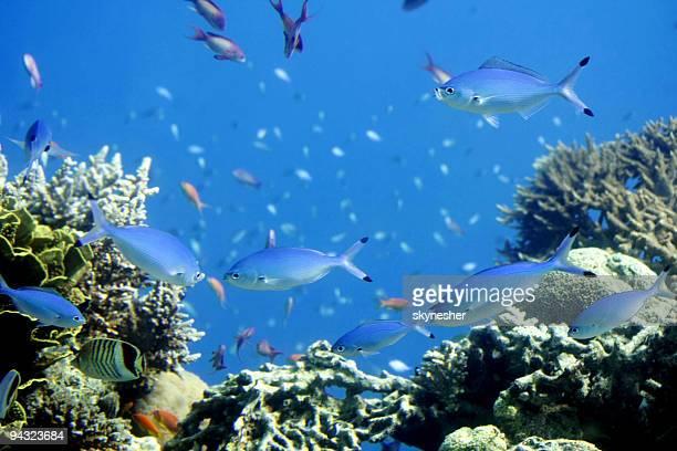 peixes tropicais e corais - fuzileiro naval - fotografias e filmes do acervo