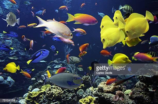 Tropical fish in giant aquarium, close-up
