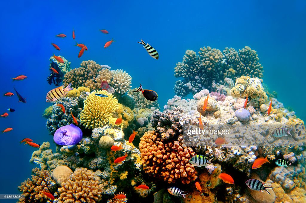 Tropical Fish on a coral reef : Stock Photo