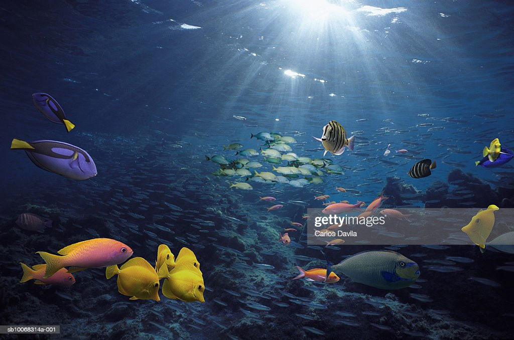 Tropical fish on reef, underwater : Stock Photo