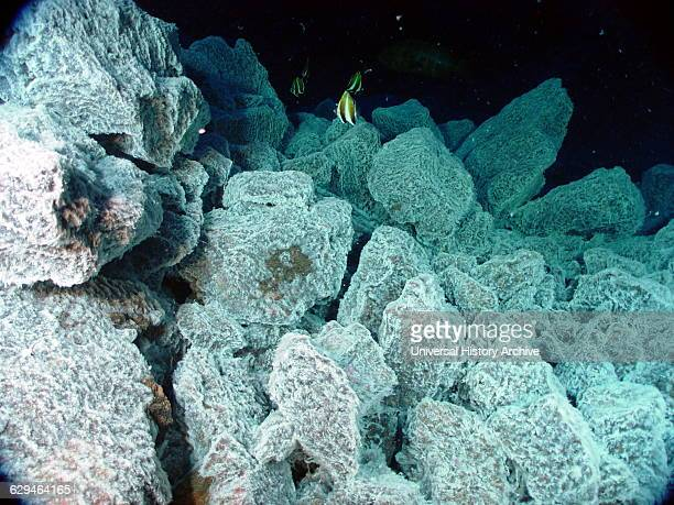 tropical fish swim above boulders covered with bacterial mat which indicates the presence of hydrothermal venting From Mariana Arc region Western...