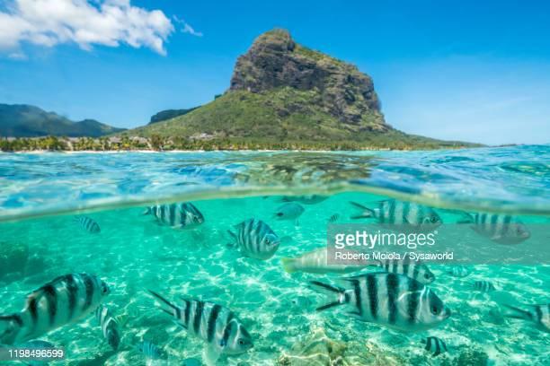 tropical fish under waves on coral reef, indian ocean, mauritius - islas mauricio fotografías e imágenes de stock