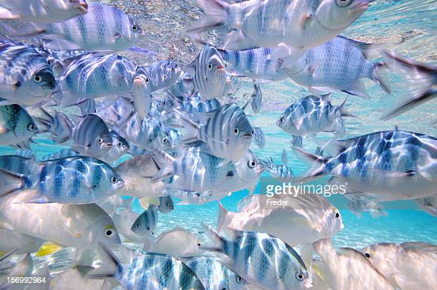 tropical fishes in crystal clear water