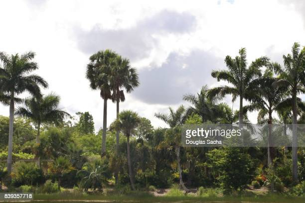 Tropical forest along a pond