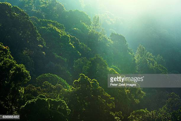 Tropical forest in the Western Ghats mountains in Kerala, India