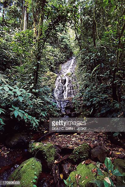 Tropical forest Monteverde Cloud Forest Reserve Costa Rica