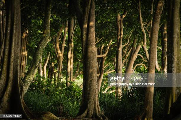 Tropical Forest on Havelock Island, Andaman and Nicobar Islands