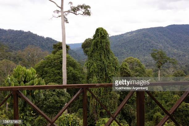 tropical forest, trees, observation platform, borneo, malaysia - argenberg stock pictures, royalty-free photos & images