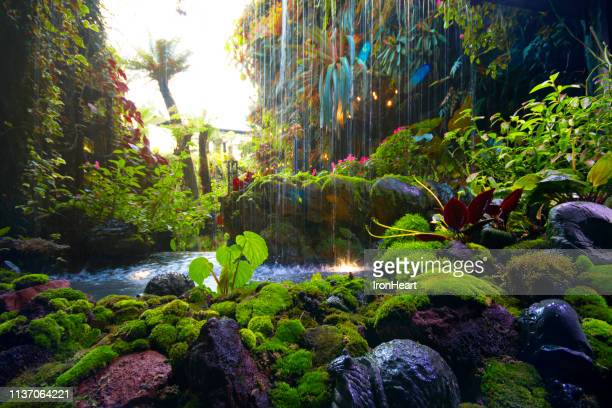 tropical forest waterfall background. - tropical rainforest stock pictures, royalty-free photos & images