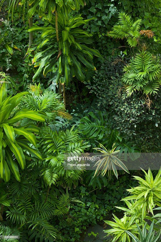 Tropische Blattfiedern Garten : Stock-Foto