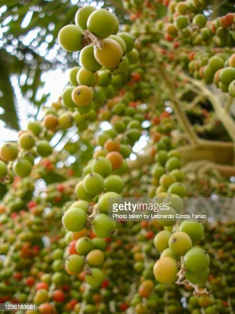 tropical fruit - leonardo costa farias stock pictures, royalty-free photos & images