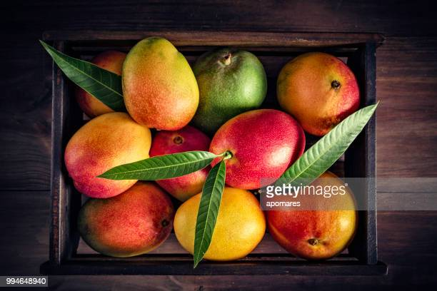 Tropical fruits: Wooden crate with assorted mangos in rustic kitchen. Natural lighting