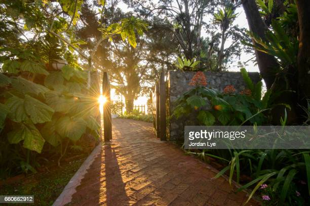 Tropical garden during sunrise