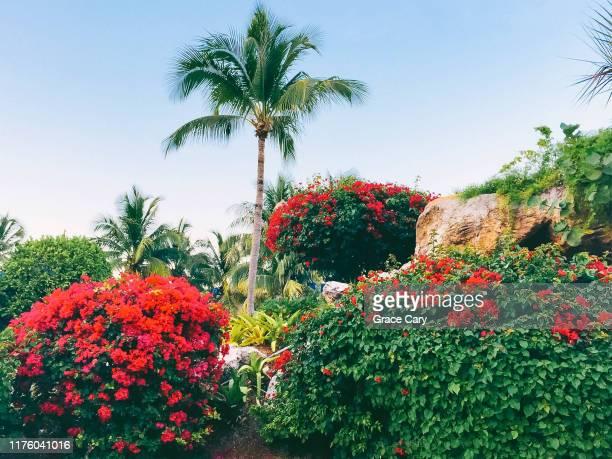 tropical garden in nassau, bahamas - ナッソー ストックフォトと画像