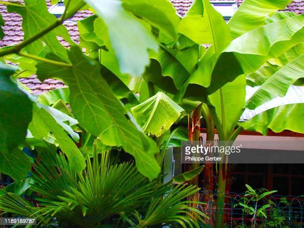 tropical garden - sarthe stock pictures, royalty-free photos & images