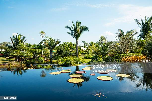 tropical garden - florida landscaping stock pictures, royalty-free photos & images