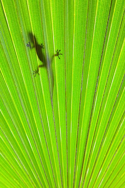 Tropical Gecko Wall Art