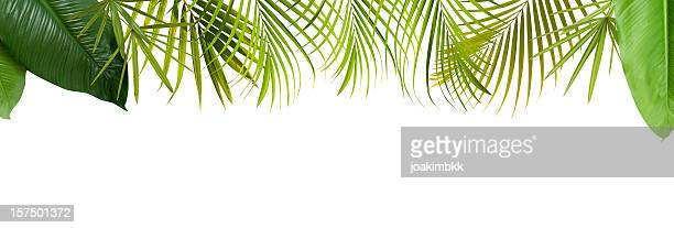 tropical green leaves frame with copy space - tropical bush stock pictures, royalty-free photos & images