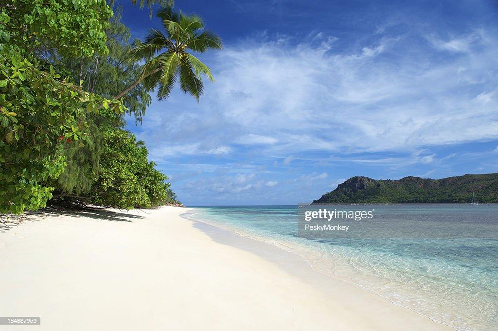 Tropical Island Beach Scenery: Tropical Island Beach Scene With Palm Tree And Blue Sky