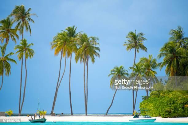 tropical island in the maldives - isole maldive foto e immagini stock