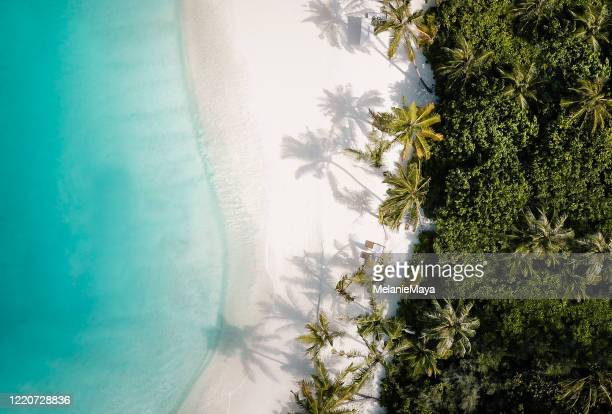 tropical island palm tree beach from above - idyllic stock pictures, royalty-free photos & images