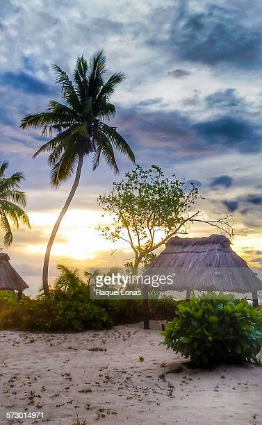 tropical island sunset - western division fiji stock photos and pictures