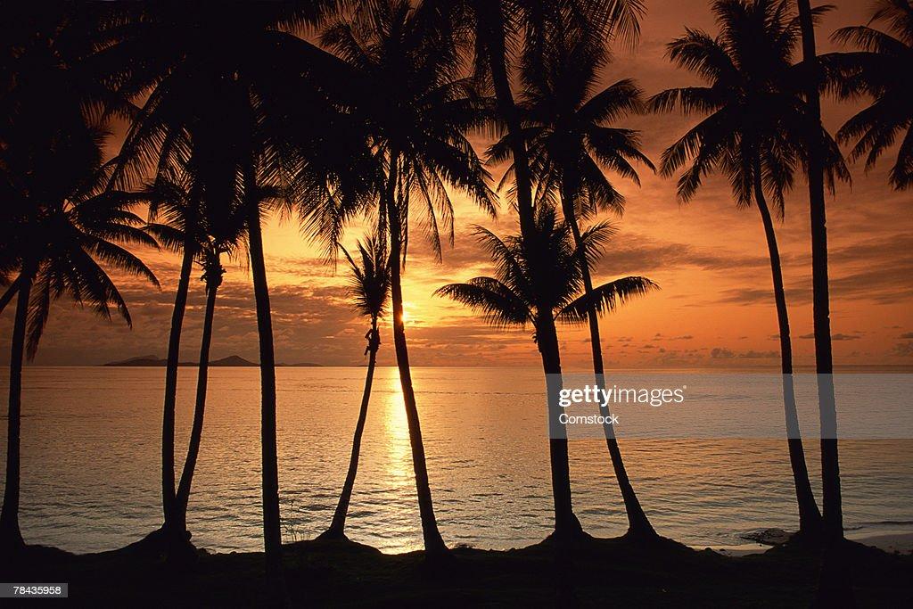 Tropical island sunset : Stockfoto