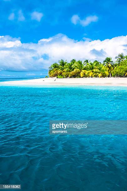 Tropical island turquoise beach with coconut trees