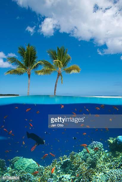isla tropical con colores coral arrecife - islas mauricio fotografías e imágenes de stock