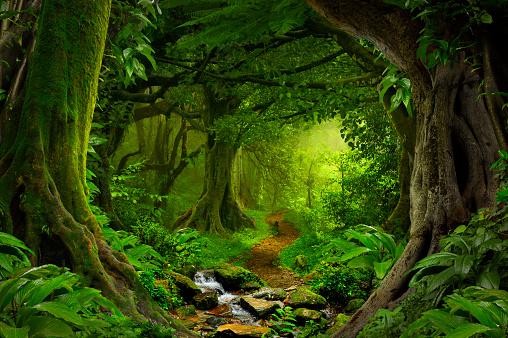 Tropical jungle 636208094